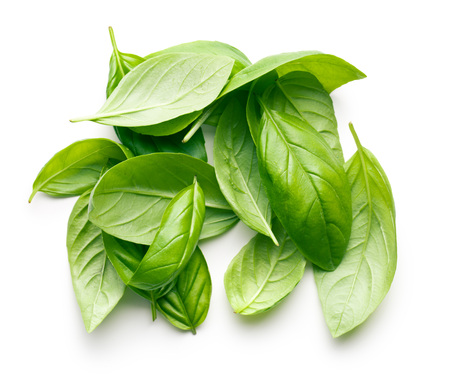 albaca: basil leaves on white background