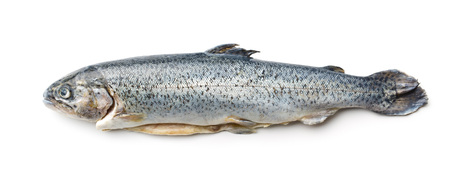 fish rearing: the gutted trout on white background Stock Photo