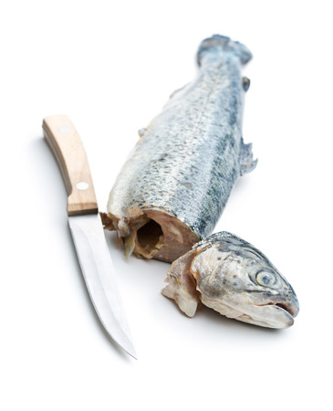 rearing of fish: the gutted trout with knife on white background