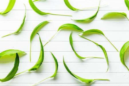 garlic: ramsons hojas frescas. hojas de ajo silvestre. vegetales saludables. Foto de archivo