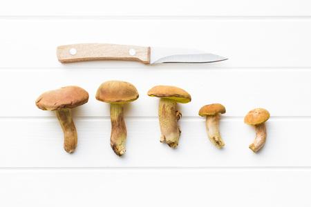 fungi woodland: Autumn harvest of fresh woodland fungi with boletus mushrooms with knife on white table.