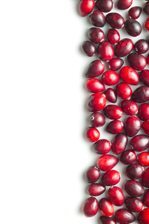 vaccinium macrocarpon: The tasty american cranberries isolated on white background. Stock Photo