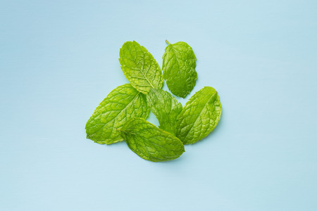 Green mint leaves on blue background. Mint herb. Stock Photo