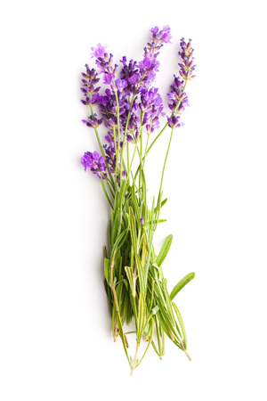 The lavender flowers isolated on white background. Stock Photo