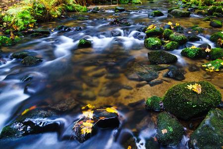 czech switzerland: Autumn on the River Krinice in Czech Switzerland Archivio Fotografico