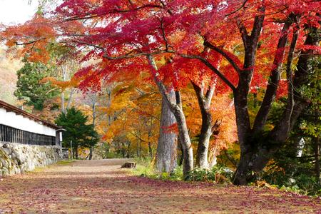 Colorful maple(momiji) leaves at Enzoji temple in Fukushima prefecture, Japan