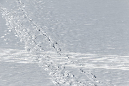 ski traces: Traces of people walking on foot and ski on flat snow