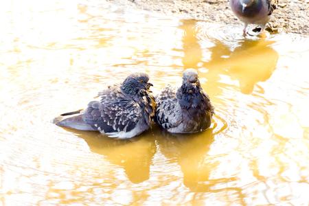 fidelidad: Dos amantes se zambulleron en el agua de color amarillo (no es necesaria la tercera)