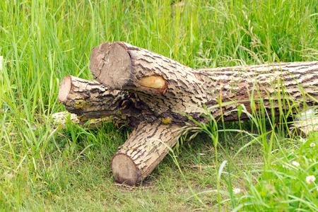 greenness: A tree without branches is (fell) on the green grass. All the branches sawn off.