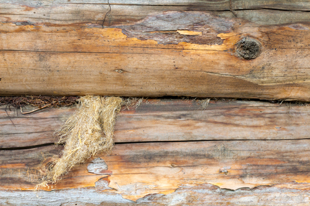 outmoded: A log of wood. Old and cracked. The surface is rough and uneven. You can see the bark.