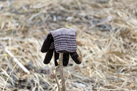 sorrowfully: Mitten brown color from the wool and dry herb. In mitten stuck to a bur. The concept of sorrow and spleen. Dumped among dead grass.