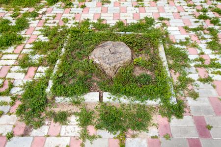 La souche d'un grand et vieux arbre sur fond d'herbe verte. Autour d'un pavé de pierre blanche et rose. Banque d'images - 60528343