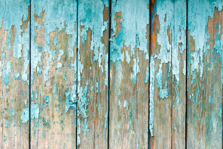 almost all: The old fence boards with chink. Painted light blue paint. From old age, almost all the coating peeled off.