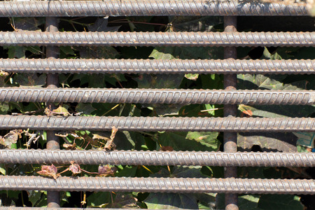 rejas de hierro: Old and rusty iron bars. In the background (in shadow) dried leaves and grass.