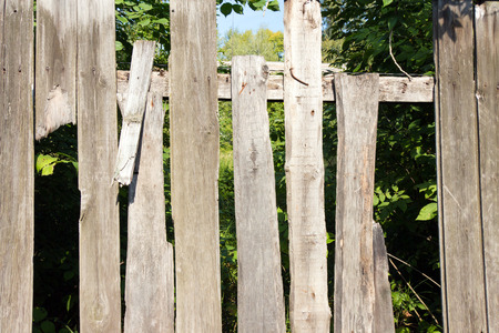 cranny: Old wooden fence grey color. Through the large cracks visible greens. The foliage behind the fence in the shade.