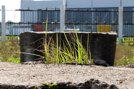 haulm: Light passes through the green blades of grass swaying in the wind. Grass grows on the stone (concrete block). In the background a fence.