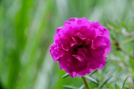 addendum: Purple flowers