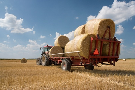 mechanization: Agriculture - tractor on the field with harvested corn in haystack Stock Photo