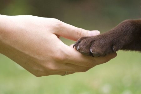 animal behavior: Friendship between human and animal - puppy give woman paw - handshake Stock Photo