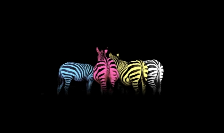 Cyan, magenta, yellow, and black (CMYK) colorful zebras (colored life) Stock Photo