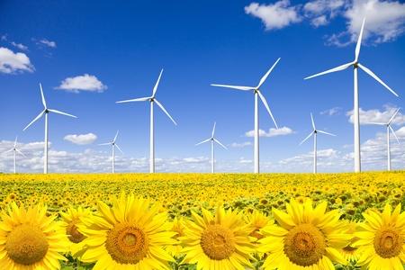 Wind turbines on sunflowers field photo