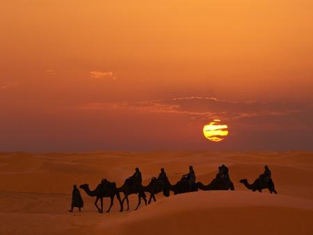 Desert ride by camel at sunset
