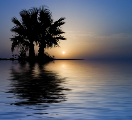 oasis: Palm trees at a sweet sunrise