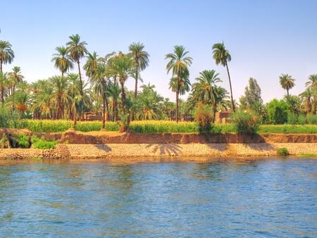 ナイル川の横にあるオアシスからの画像 写真素材