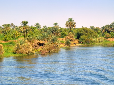 Images from Nile  Oasis beside the river