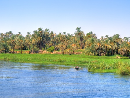 nile: Images from Nile  Oasis beside the river