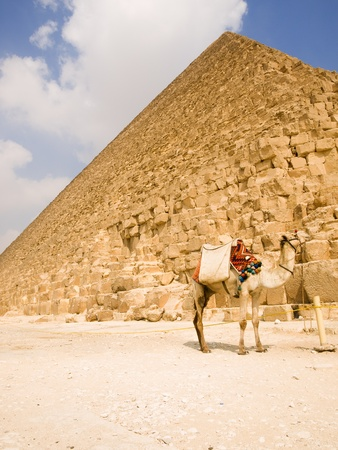 cheops: Dromedary in front of the Pyramid of Cheops, Egypt