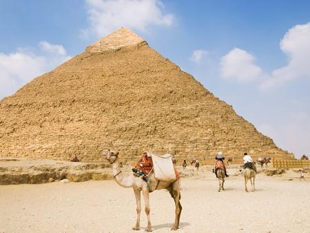 chephren: Dromedary in front of the great pyramid of Chephren Stock Photo