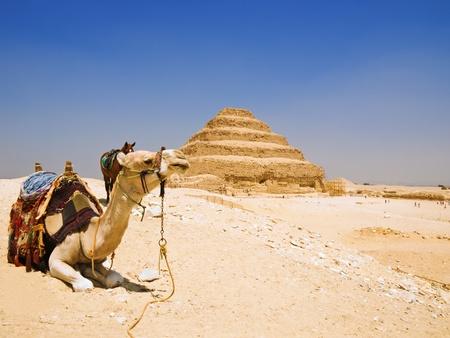 djoser: Dromedary and Great step pyramid of Djoser, Saqqara