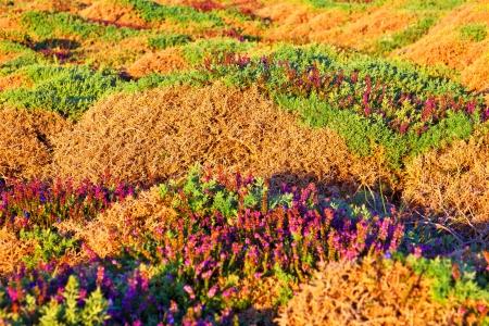 galicia: Dense vegetation in Galician coasts, Spain Stock Photo