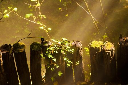 sunbeams: Sunbeams trough a misterious forest