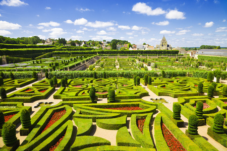 ornamental bush: Amazing gardens from Villandry chateau, France