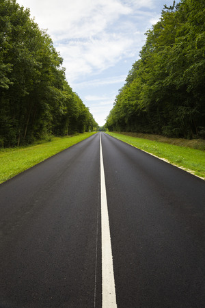 Black roadway through the forest Stock Photo