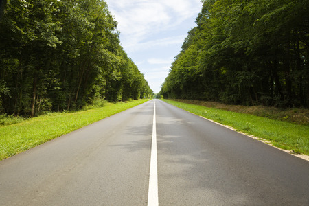 roadway: roadway through the forest