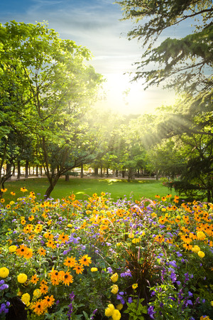 meadows: Flowerbed rounded by trees against sunset sunbeams Stock Photo