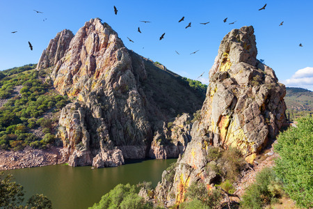 Mirador del Salto del Gitano in Monfragüe National Park. Nest of a colony of black vultures over Tagus river. Province of Caceres, Spain