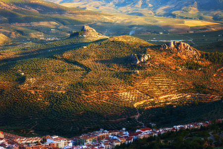 olive farm: landscape full of olive groves near the city of Jaen at sunset, Spain