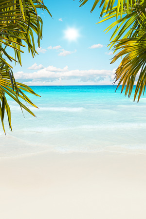 caribbean beach: Stunning Caribbean beach with transparent water Stock Photo
