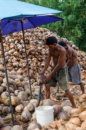 Koh Samui, Thailand 17072016 : The local worker they are peeled coconuts expertly. Everyday have many coconut from the farm. They have to do peeling coconut thick and fast by spearhead knife.