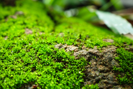 green moss on the stone. mossy rocks background. Stock Photo