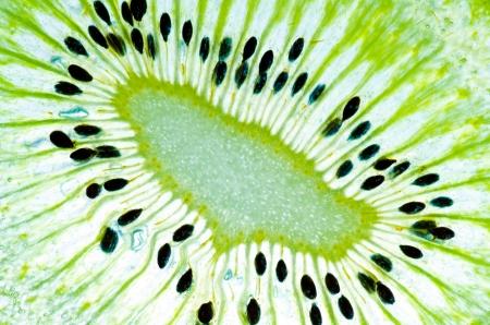 sliced kiwi fruit close up