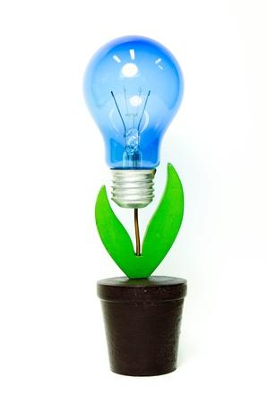 Light bulp plant isolated on white background Stock Photo - 16962655