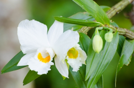 White orchids with leaves in the forest photo