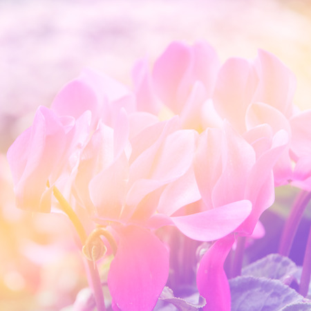 colorize: sweet color flowers in soft color and blur style for background