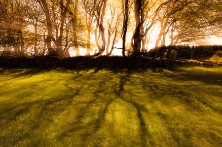 온난 한 톤을 가진 나무를 통해서 직접적인 햇빛