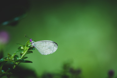 Close Up Beautiful White Butterfly Grab On Green Leaf, Color Toned